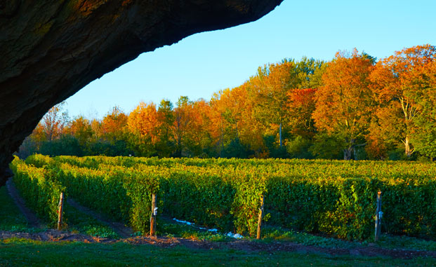 Best Wineries With Restaurants Prince Edward County
