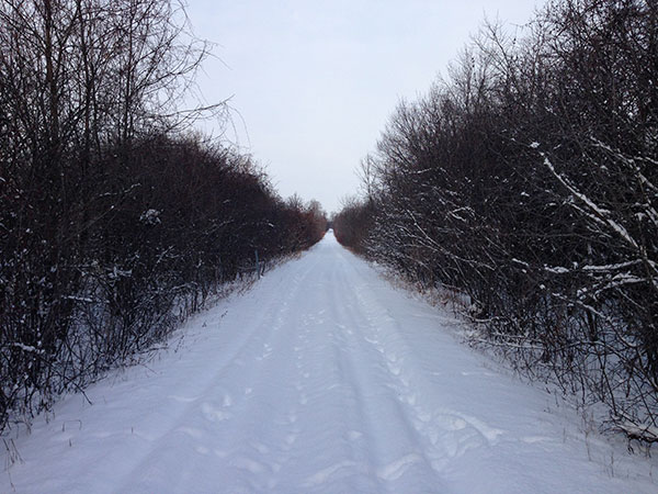 Millennium Trail in winter